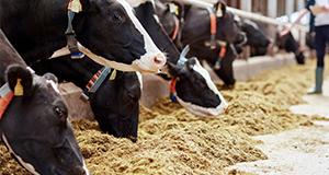 畜産・水産事業