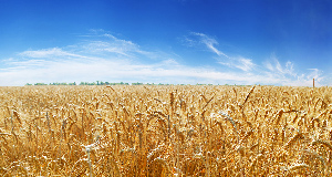 穀物・食品大豆・油糧種子事業