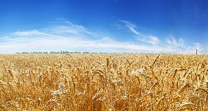 Grain, Food Soybeans & Oilseeds