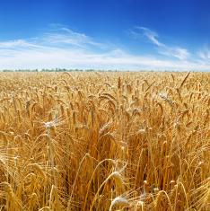 Foods & Grain